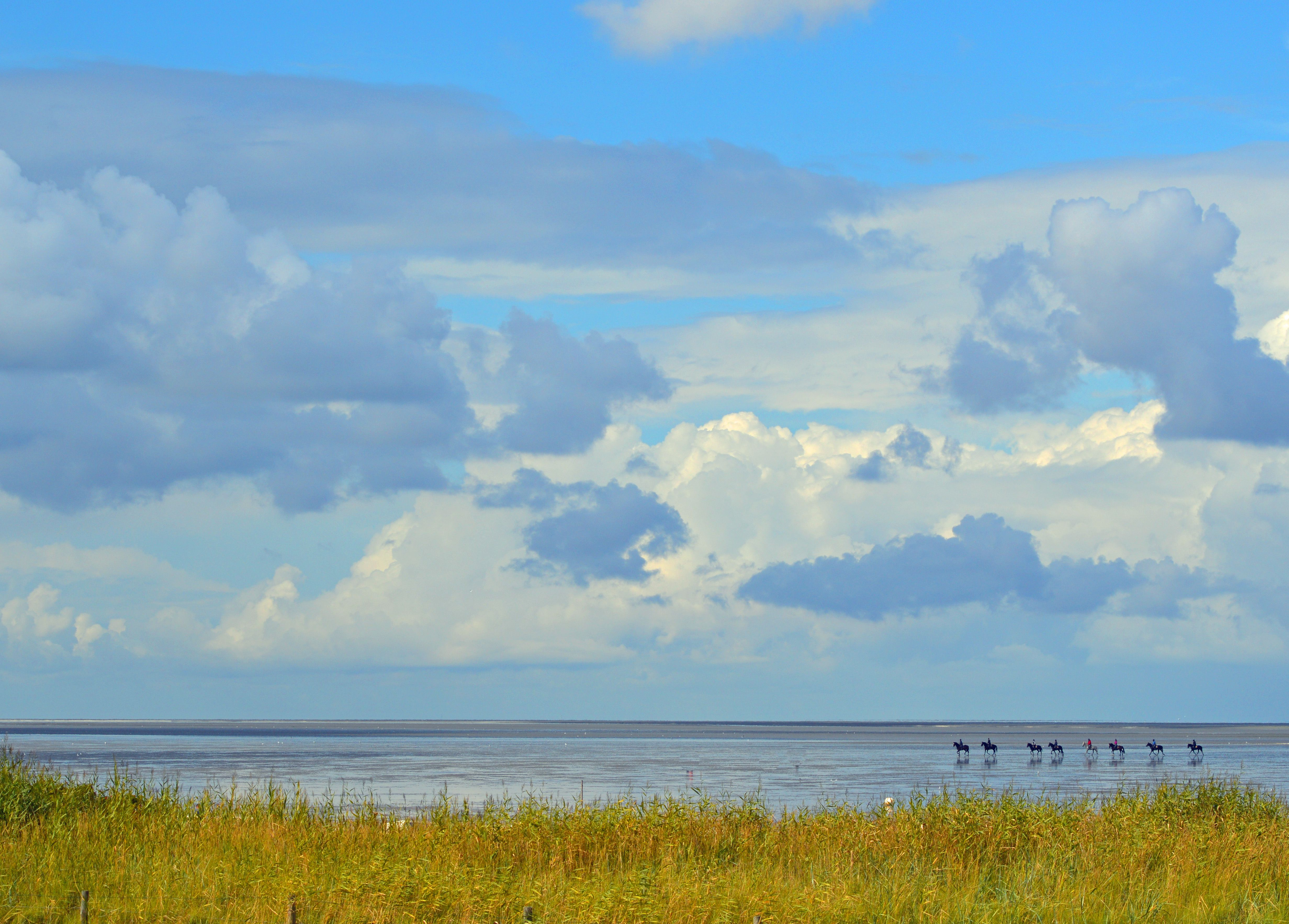 Horses Gallop On The Mud Flats When The Tide Is Out Horse Galloping Unesco World Heritage Unesco World Heritage Site