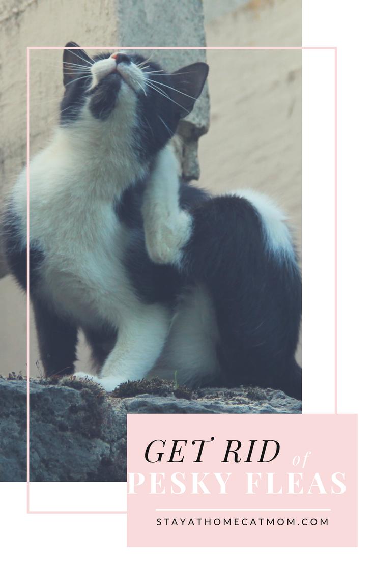 Get rid of pesky fleas for good!