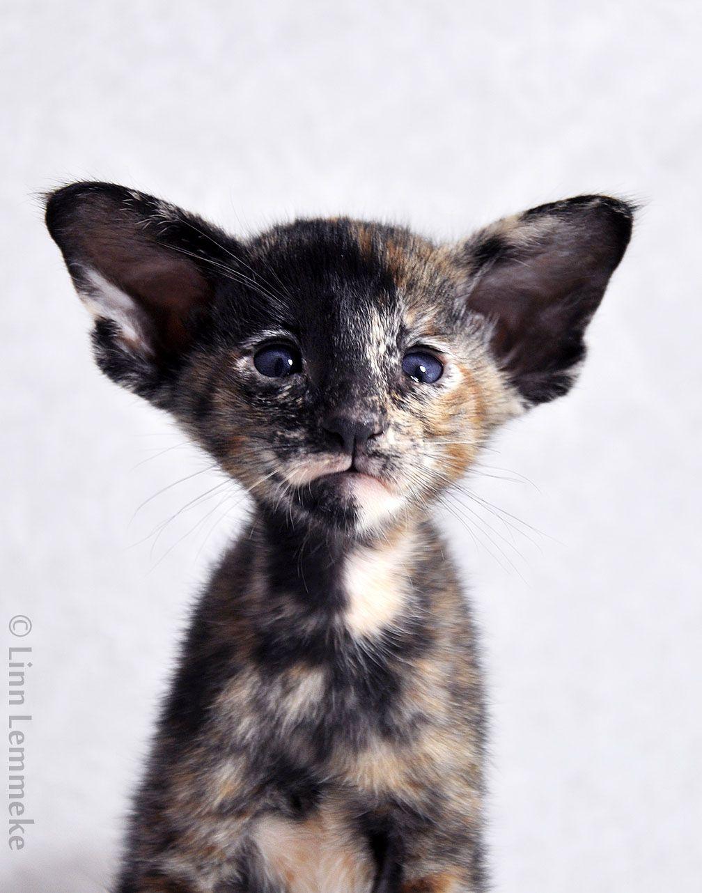 YES, I'VE HEARD 'EM ALL WHAT BIG EARS YOU HAVE GRANDMA