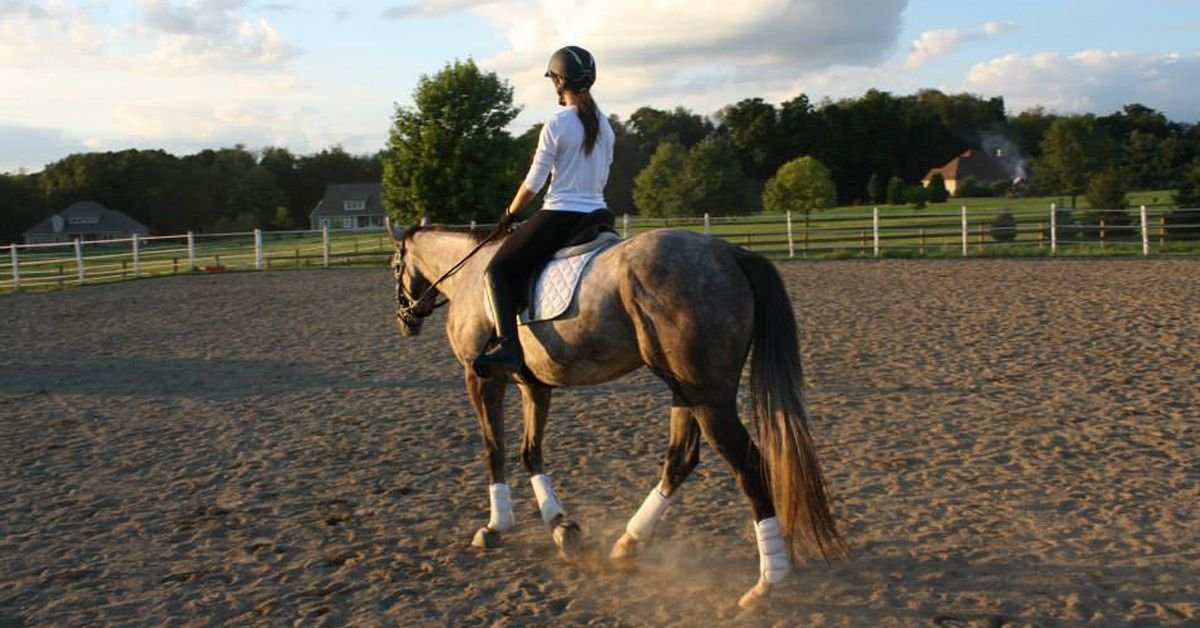 How to Cool Down a Horse in Summer - Wondering how to help your horse cool off after a workout? Use these tips to help your horse recover from the heat.