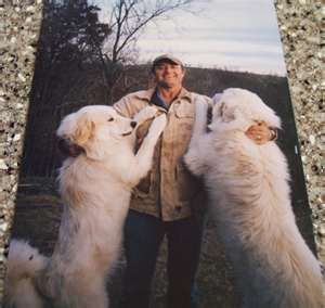 Wow They Are Big Great Pyrenees Dog