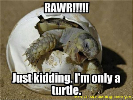 Pin By Jeanne Drennan Harvest Herba On Laughter Like Medicine Turtles Funny Funny Animal Memes Funny Animals