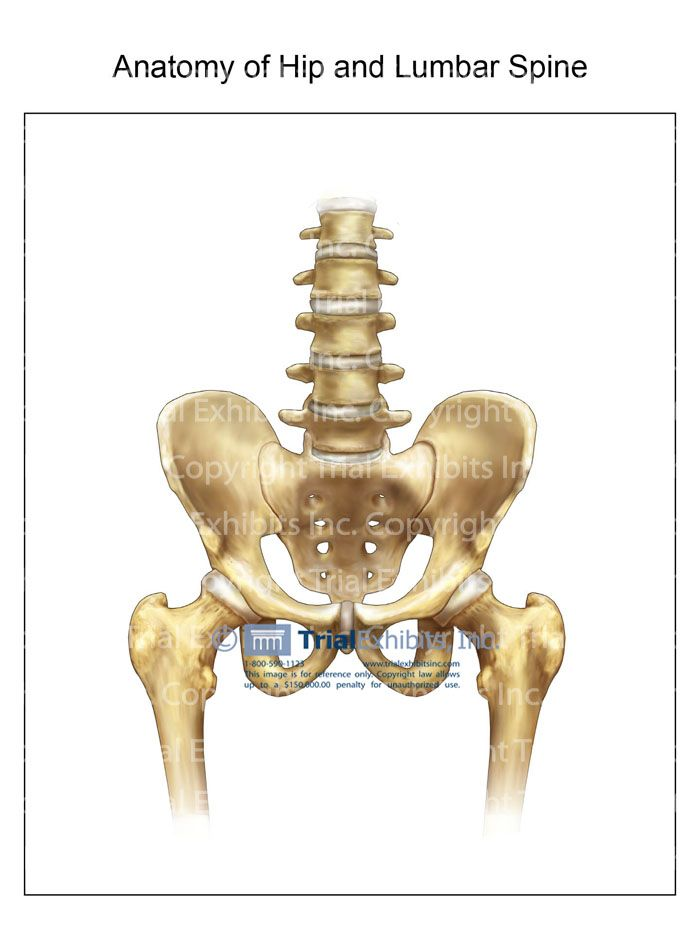 Anatomy Of The Spine And Hip Hip Illustrations Pinterest Anatomy