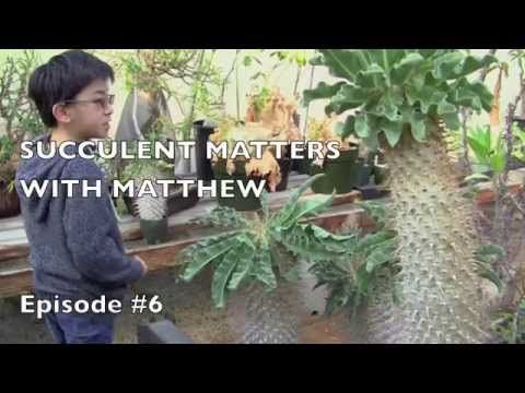 Matthew Visits Rare Succulents Nursery, Part 2 of 3