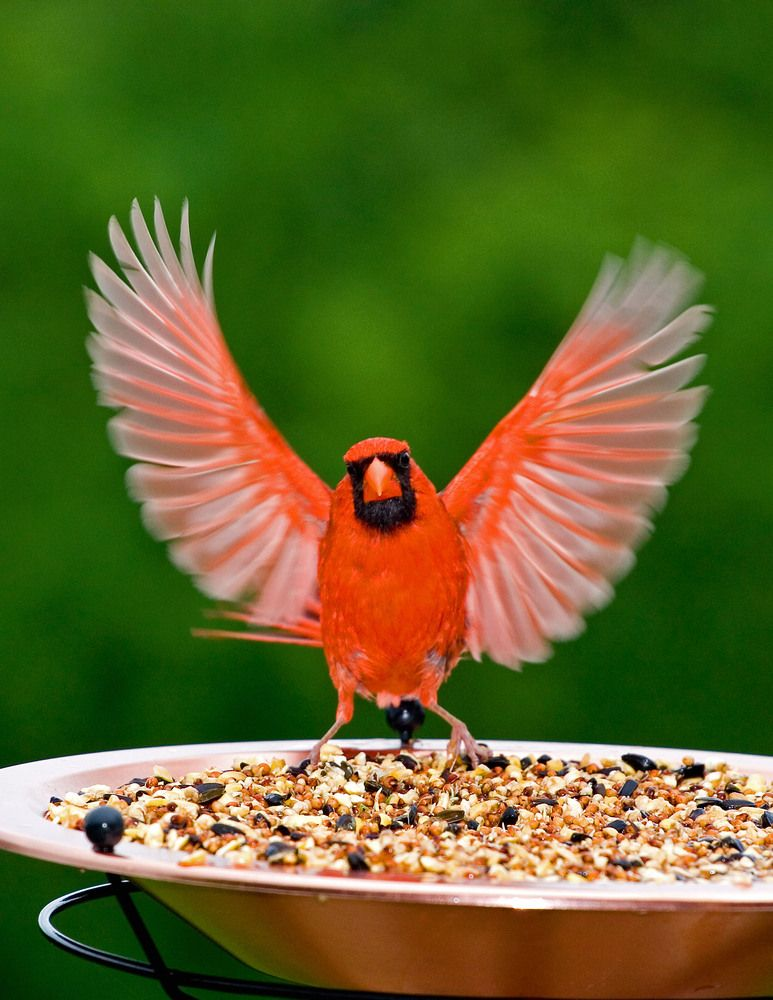 Pin On Bird After Bird