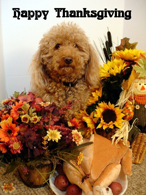 oskar logan s funny dog pictures happy thanksgiving Dog