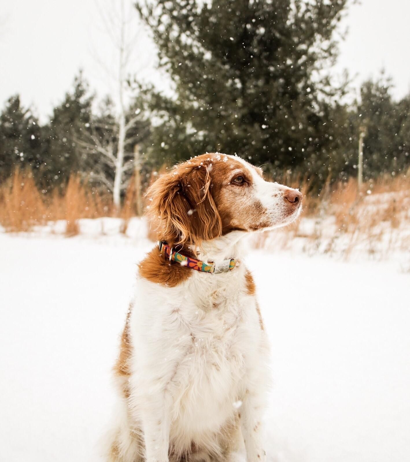 Lucy quietly observes the snowfall #dogs #pets #dog #Adopt #love #cute #animals #puppy