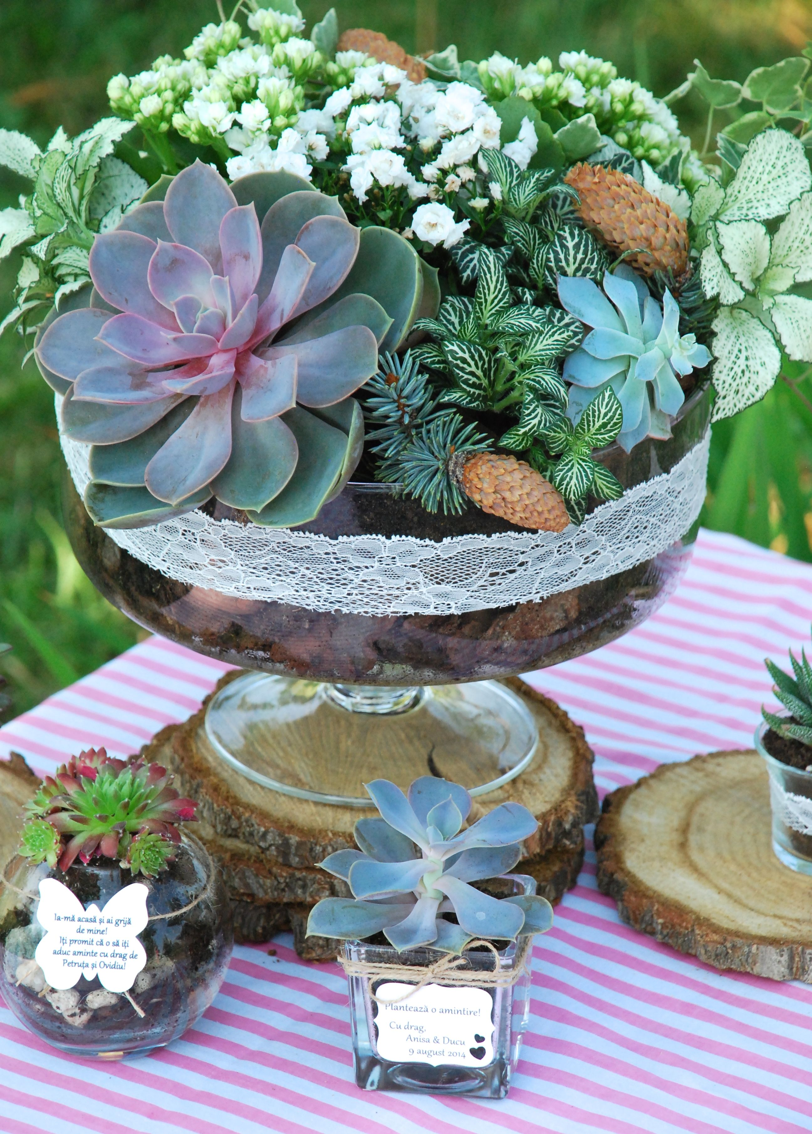 Living Plants Centerpiece And Table Arrangements For A Natural