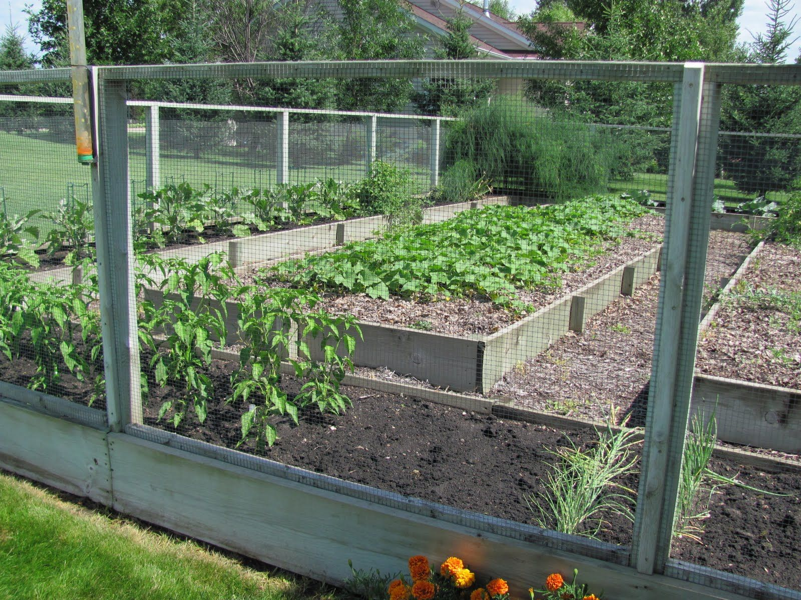 Very cool raised bed tall fenced in garden, looks deer