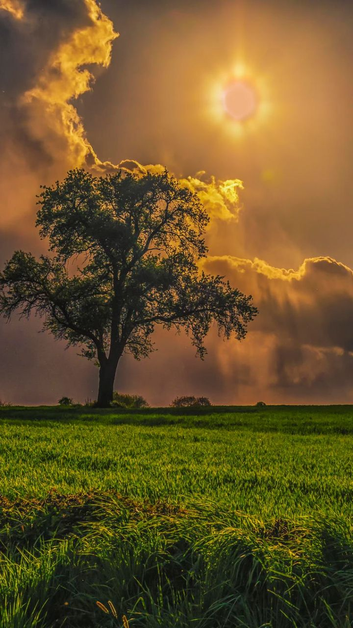 Download Wallpaper 720x1280 Field Trees Grass Sky Cloudy Samsung Galaxy S3 Hd Background Beautiful Nature Nature Photography Nature Pictures