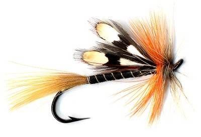 Trout fishing fly for Fly fishing bait