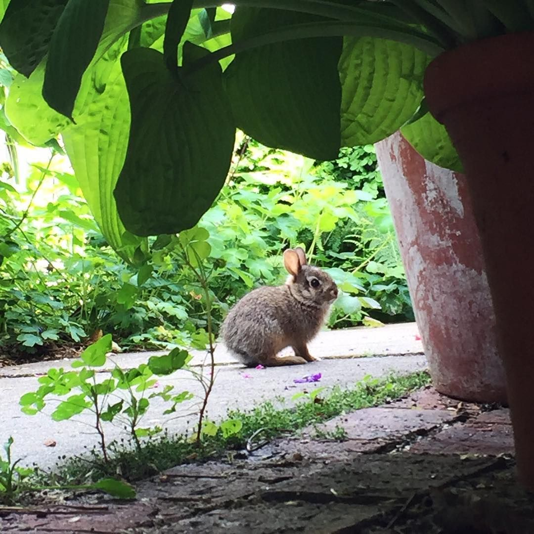 we have a family of rabbits in our backyard so cute it looks