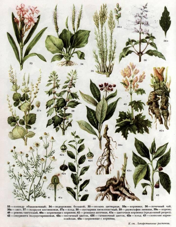 сорняки средней полосы россии фото и названия пошива