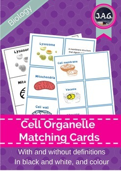 cell organelle function matching cards for basic on cell wall function id=18995