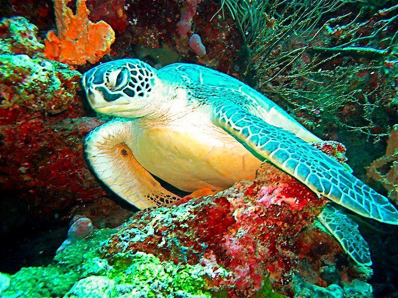 Maldives Pictures Maldives Photos Maldives Images