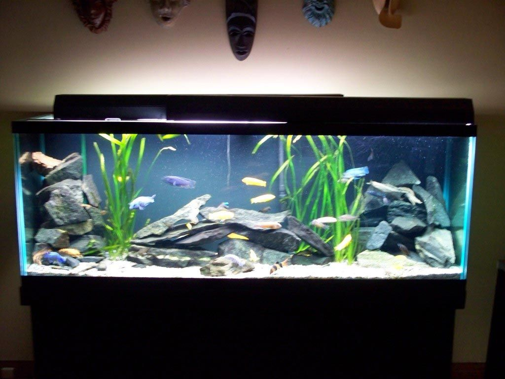 Freshwater fish aquarium decorations design ideas fish for Fish tank bedroom ideas