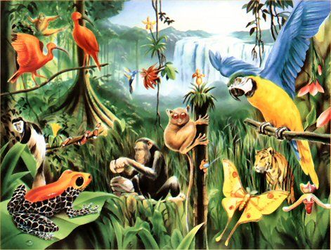 Rain forests have extremely diverse animals. Links to website with ...