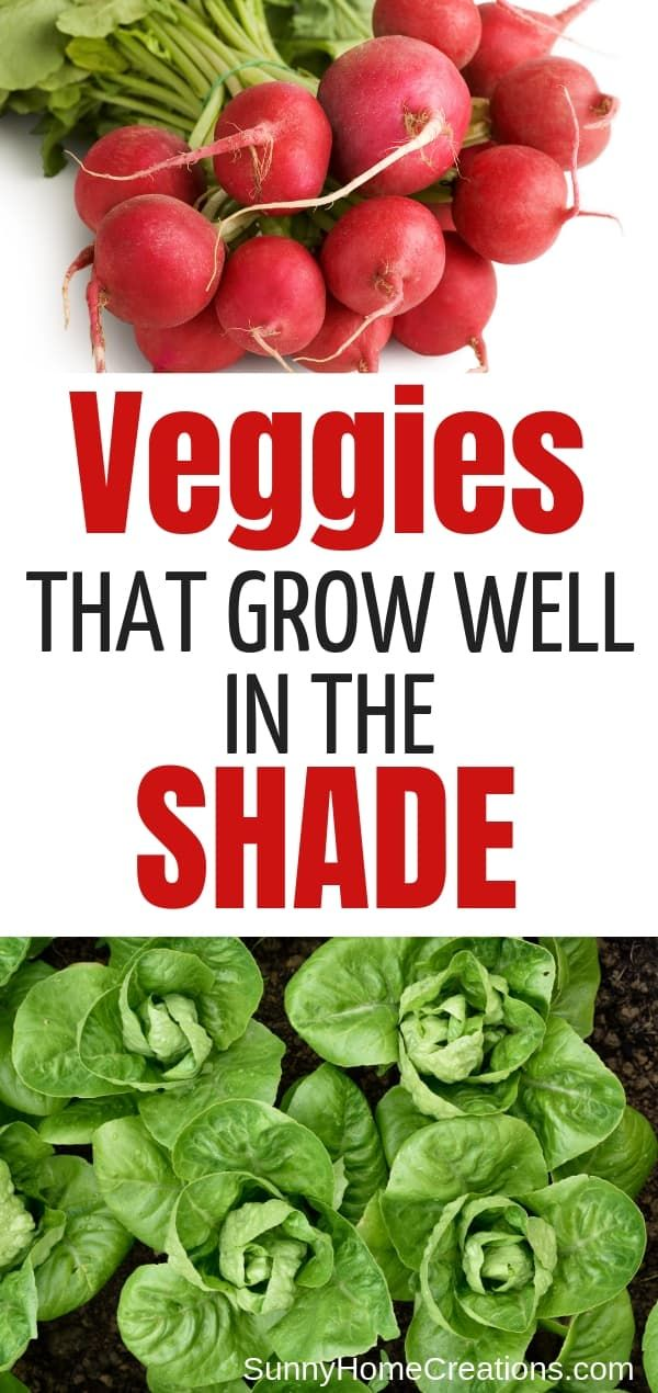 Vegetables That Grow In Shade Growing Vegetables 400 x 300