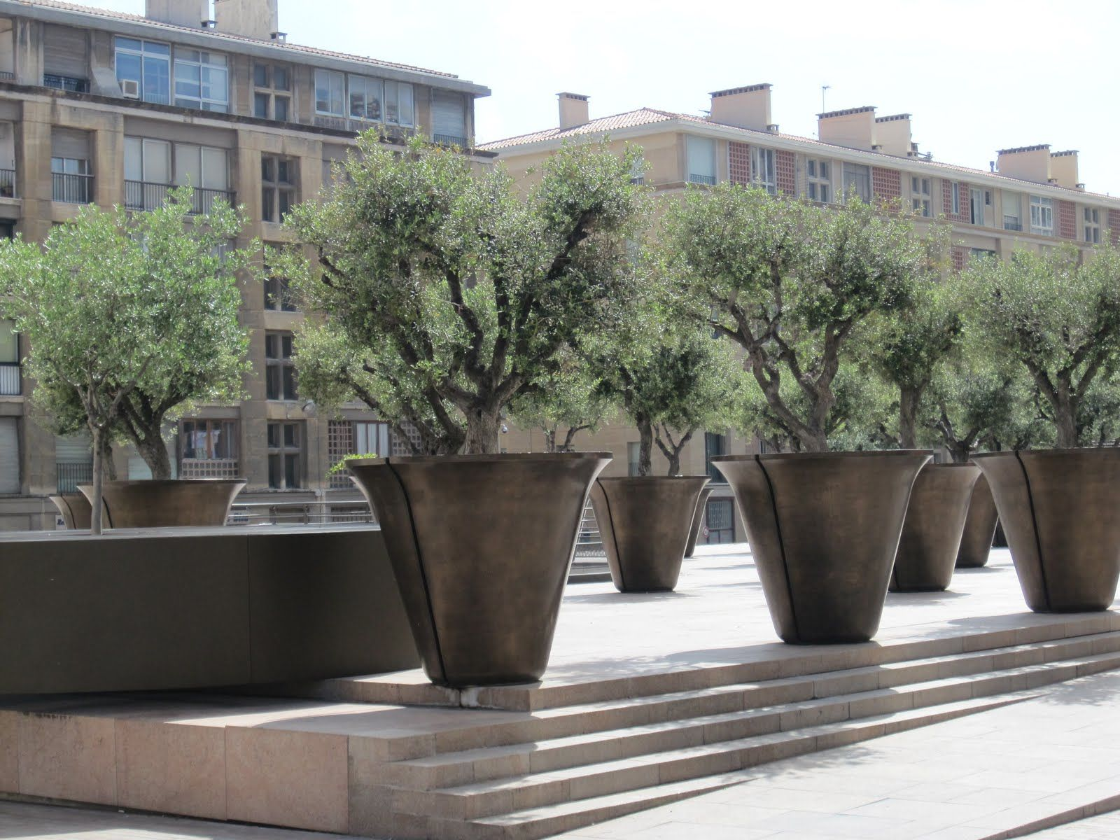 large potted trees Google Search Terrace Pinterest