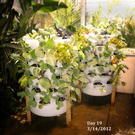 Welcome To The Garden Tower Project This Truly Is An Amazing System Which Includes Com With Images Indoor Vegetable Gardening Organic Vegetable Garden Sustainable Garden