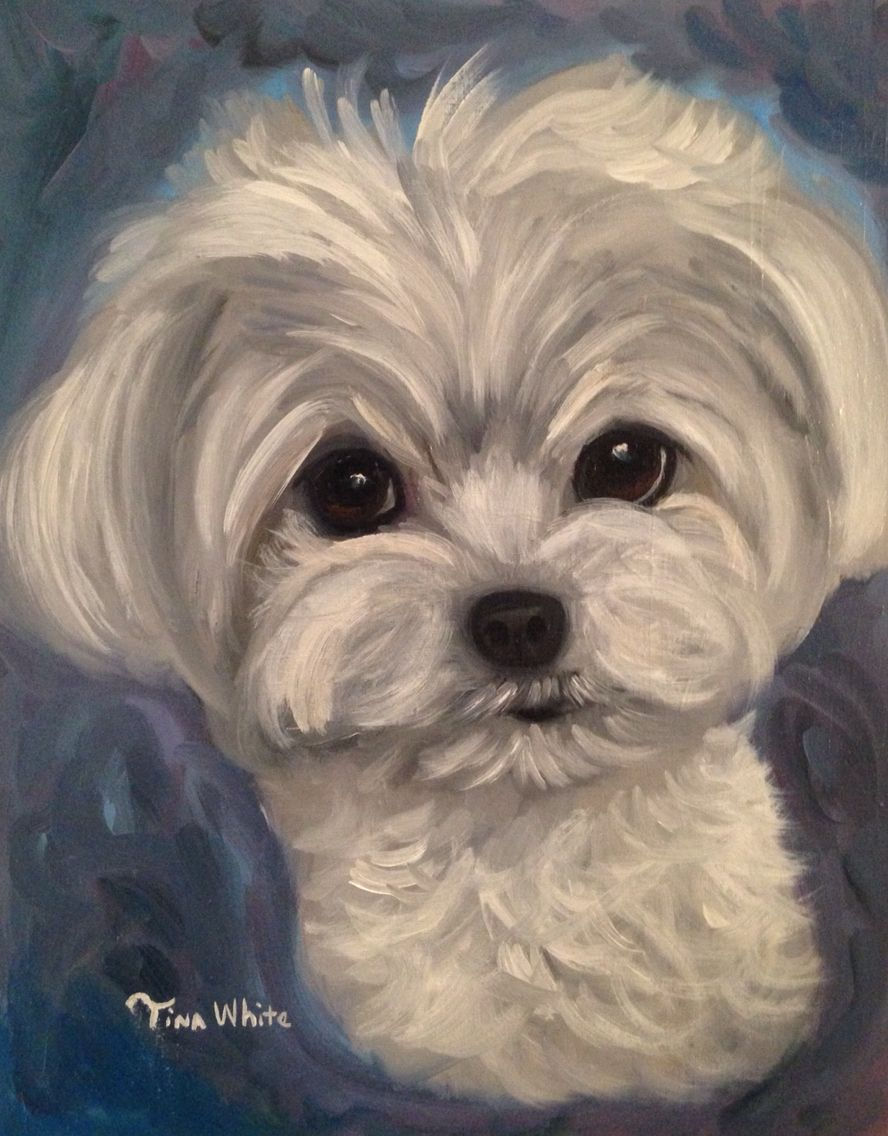 Oil Painting Maltese Dog Art By Tina White Dog Art Maltese Dogs