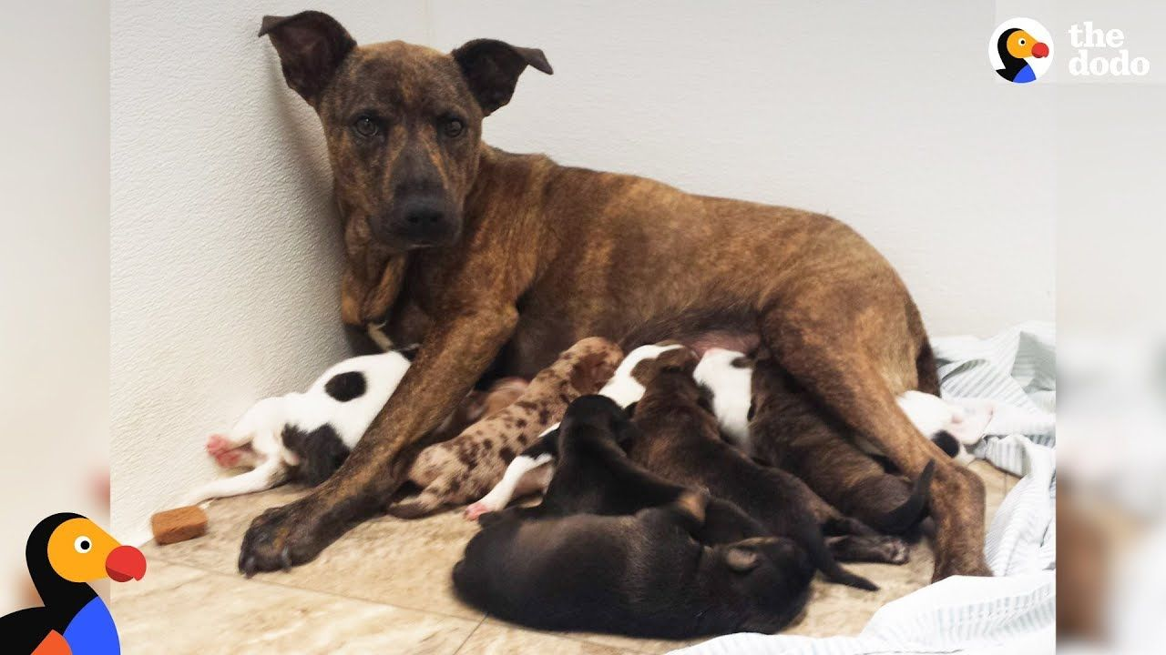 Growling stray dog protecting her puppies slowly trusts rescuers