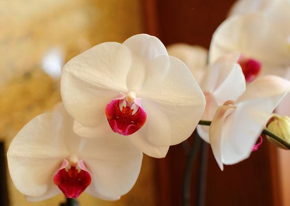 Diy Orchid Inspiration Diy Orchids White Flower Pictures Orchids