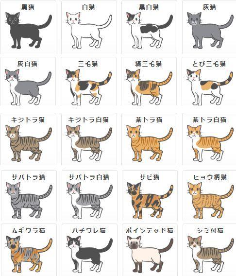 Pin By Maya Wakabayashi On Cats Exotic Scottish Fold Abyssinian