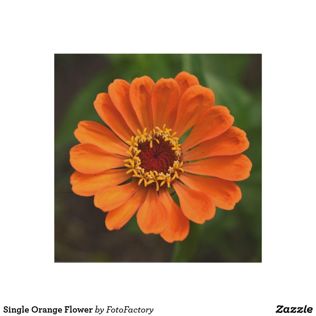 Single orange flower wood wall art flowers and foliage products