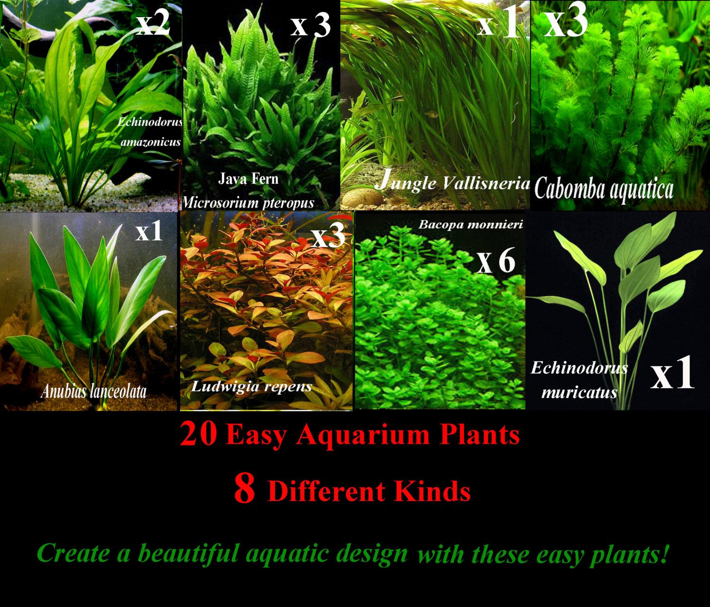 20 Easy Live Aquarium Plants 8 Different Kinds Amazon Swords Java Ferns Anubias Vallisneria Cabomba Ludwig Planted Aquarium Live Aquarium Plants Plants
