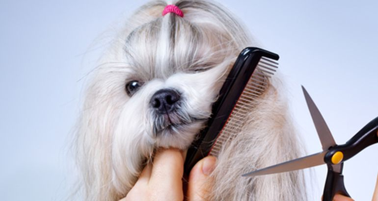 Shih Tzu Grooming Is Not Actually That Difficult Even For The Novice Groomer And Can Be Quite Easily Undertaken A Dog Grooming Dog Clippers Shih Tzu Grooming
