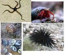 saltwater cleaning crew pack aquarium sea star hermit crabs snails & sea urchin