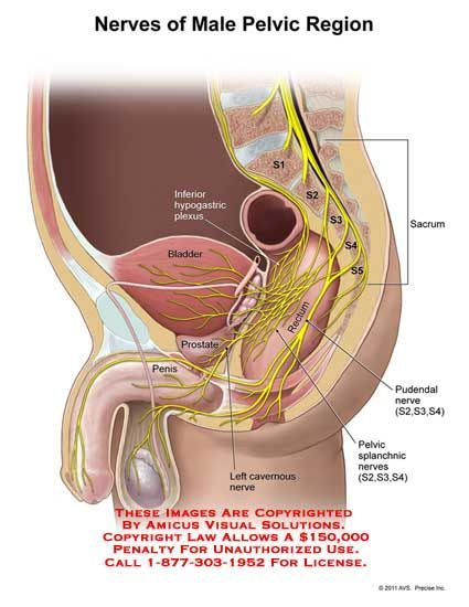 Plexus And The Pudendal Nerve Buscar Con Google Dads Health
