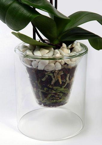 maceta transparente orquidea