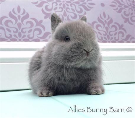 Allie's Bunny Barn - ☆AVAILABLE BABIES☆
