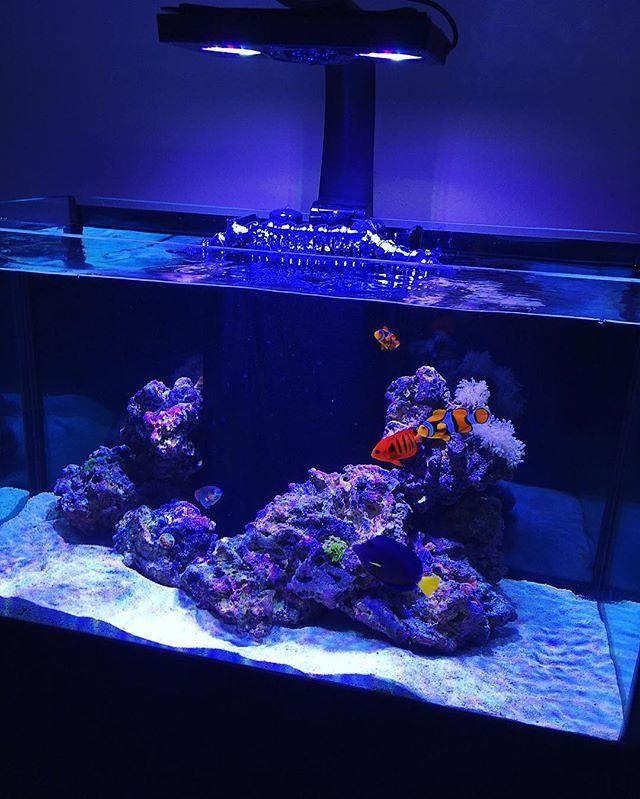 Instagram Photo By Fishanatic Jul 17 2016 At 7 10pm Utc Saltwater Fish Tanks 55 Gallon Tank Reef Tank