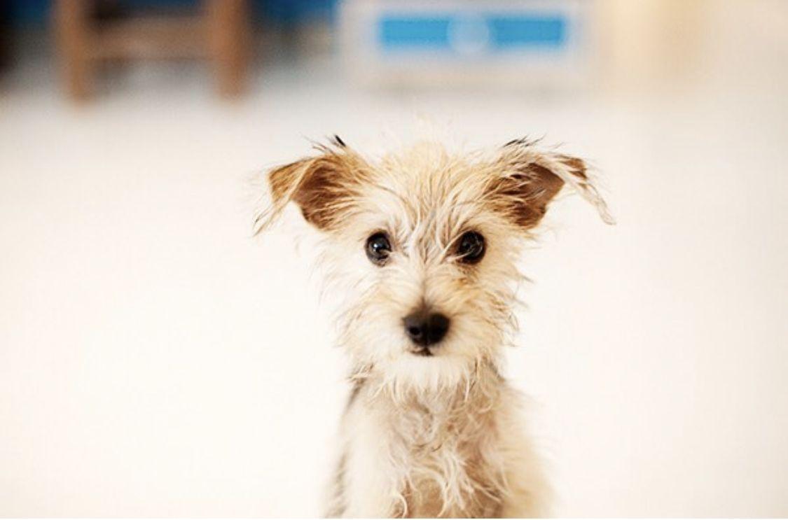 10+ Colorado springs animal shelter ideas