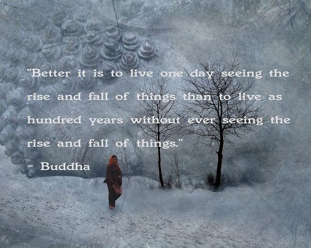 Buddha Quote 3 by h.koppdelaney, via Flickr