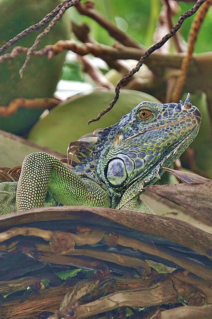 Pin En Fauna Y Flora En Mexico