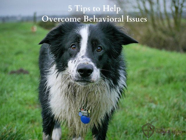 5 Tips For Helping Your Rescue Dog Overcome Behavioral Issues