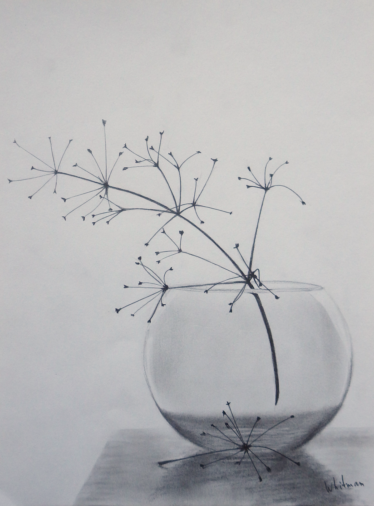 Round glass vase with dry umbelliferae flowers. Pencil