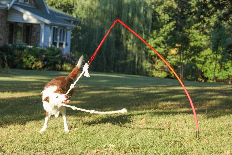 Tether Tug Dog Toy Xl Over 60 Lbs Amazon Com Outdoor Dog