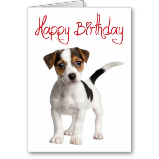 Jack Russell Terrier Puppy Dog Birthday Card Zazzle Com Met