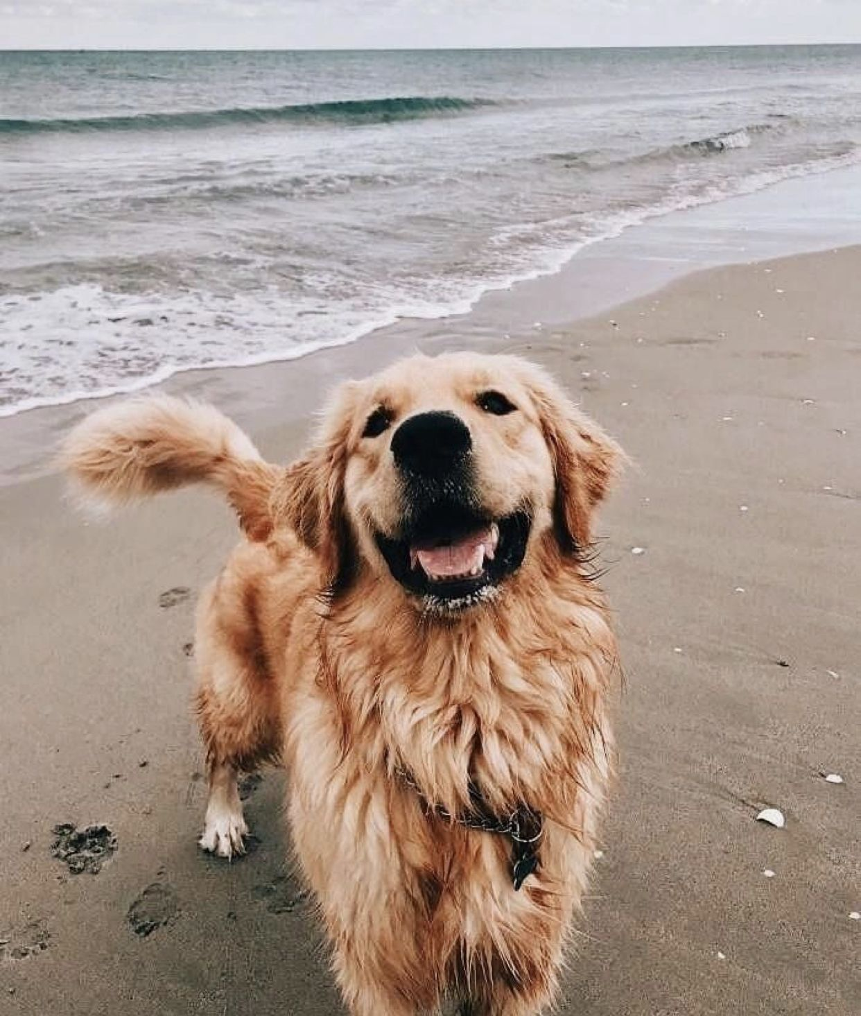 Cute Puppy Aesthetic Golden Retriever Cute Puppy Pictures Cute Dogs And Puppies Dogs And Kids
