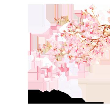 Vector Watercolor Japan Cherry Blossoms Pink Watercolor Vector Japanese Vector Cherry V Japanese Cherry Blossom Cherry Blossom Background Cherry Blossom Petals