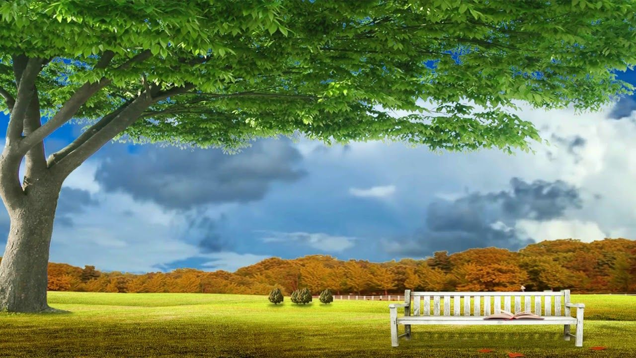 Beautiful Nice Garden With Natural Scenery Dream Background Video Effec Dream Background Natural Scenery Background