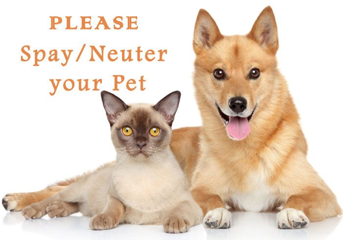 If you are looking for low cost spay and neuter at