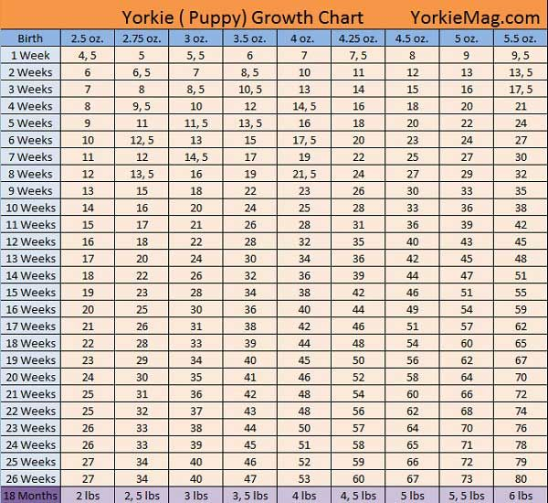 Yorkie growth chart yorkie pinterest growth charts chart and
