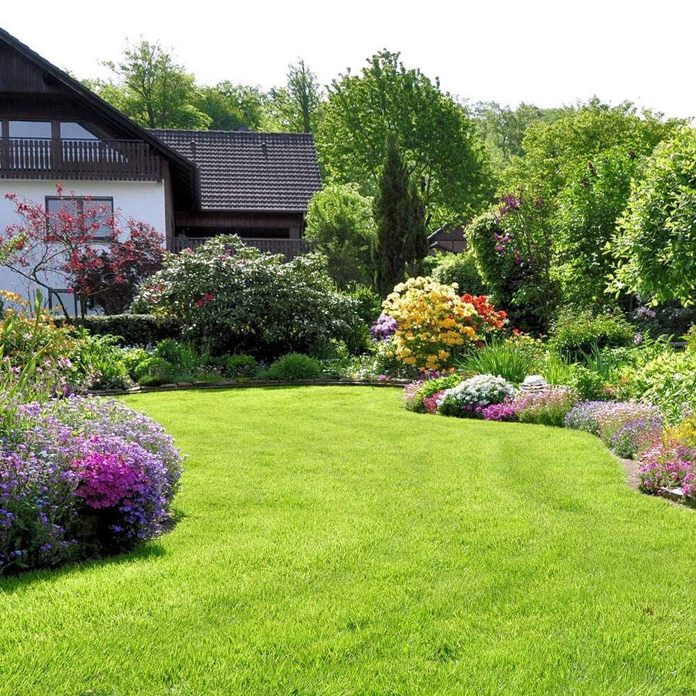 How to plant the lawn of your dreams in 2020 lawn