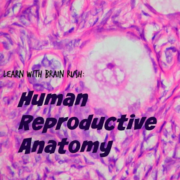 Learn With Brain Rush Human Reproductive Anatomy Game Worksheet